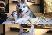 Ha! Ha! Ha! (Snort... giggle)