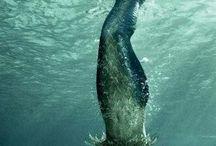 Mermaid majik