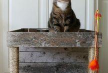 legowika koty