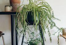 Plantas en el interior de la casa.