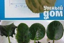 piante