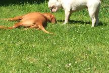 unsere Wauzis / Hund