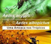 mosquitos e saúde