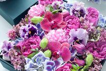 Scatole di fiori