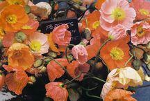 blom / by Jana Hamman