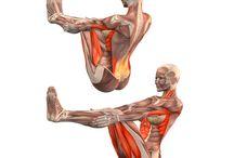 йога анатомия