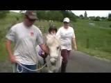 Natural Saddles NZ