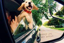 doggies. / by Stacy Ryan
