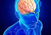 nosso cerebro