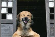 • Smiling Animals