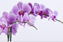 mijn lieverling bloemen orchidee