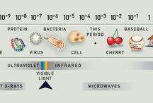 Science / by Laurel