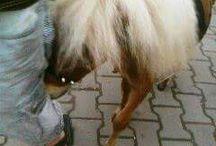Mamaia cu ponei
