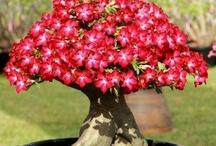 I love bonsai