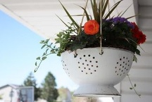 gardening/hagetips