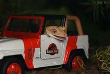 GKO11 / Rhacodactylus ciliatus-crested gecko
