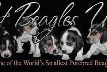 Beagles / by Jennifer Creech