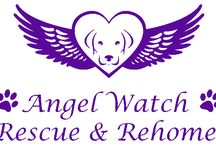 Angel Watch Rescue and Rehome - Slogan Clothing Company / We are really excited to be working with Angel Watch Rescue and Rehome, helping to raise awareness about adopting rescue animals. We have an extensive range of tshirts, hoodies and even aprons dedicated to animal rescue http://www.sloganclothingcompany.co.uk/collections/all/angel-watch-and-rescue #angelwatchrescueandrehome #tshirts #hoodies #sloganclothingcompany