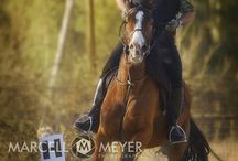 Sport Photography / Motorsport, Motocross, Cycling and Horse Riding Photography