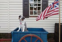 Dogs of DoG Street / by Colonial Williamsburg