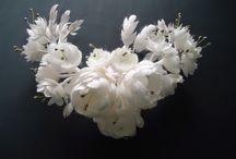 kozadan çiçekler
