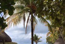 Island life / Holiday in mauritius