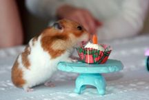 Hamster & Mouse / Hamster is so cute & funny!