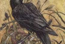 For the love of Crows