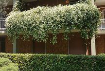 Terrace's gardening