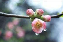 Water Drops - Gocce Gocce