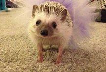 Hedgehog stuff ❤️
