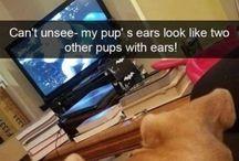 ANIMALS / PETS