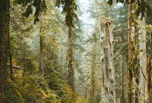 Vergessene Wald