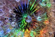 Dandelion Dreams / by keena proctor