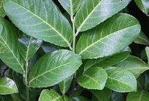 Flagstang-bedet / Planter i vores bed