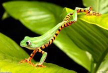 FOR THE LOVE OF FROGS / Since I was a small child, I have been fascinated and in love with frogs