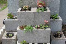Garden, Plants, DIY