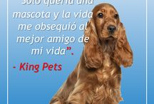 Frases King Pets