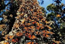 butterflies awesome