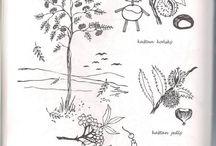 Stromy, keře, les