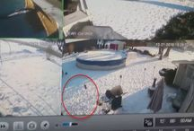 Viral Video - VIDEO - Mastiff Pepper Sprayed, Animal Abuse Caught On Home Surveillance