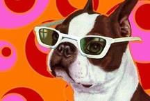 Boston Terriers & other best friends