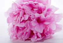 Wedding Flowers / by Robin Joseph