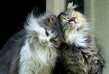 Love Fluffs