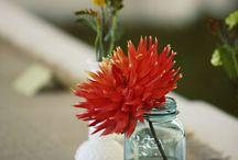 gardening/yard / by Tess Derosier