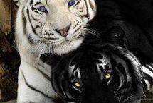Animaless