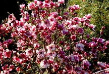 Our Garden / Around the gardens of Chalets @ Terraced Gardens