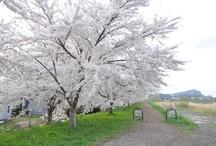 The lovely Hokkaido  / we both love Hokkaido, a very very nice and peaceful city / by Ashley Lam