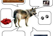 B_cechy zwierząt