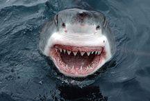 SHARKS! / by Jessica Marvel